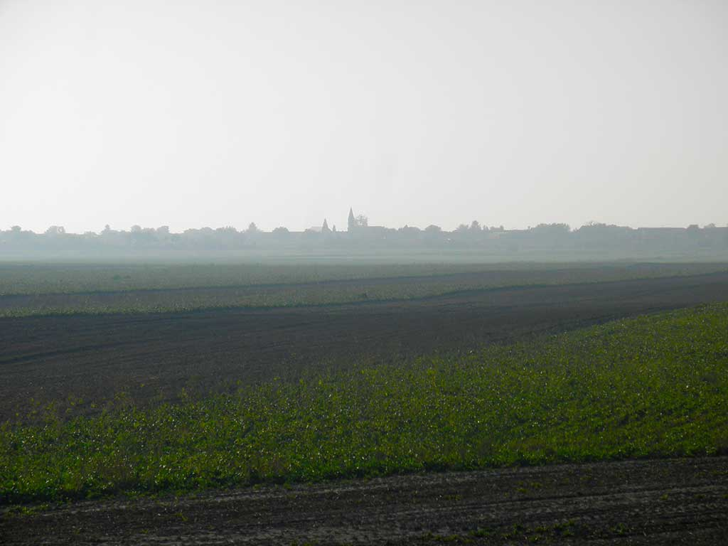 Kneževi Vinogradi - The Danube alluvial terrace (Vukmanić 2013)
