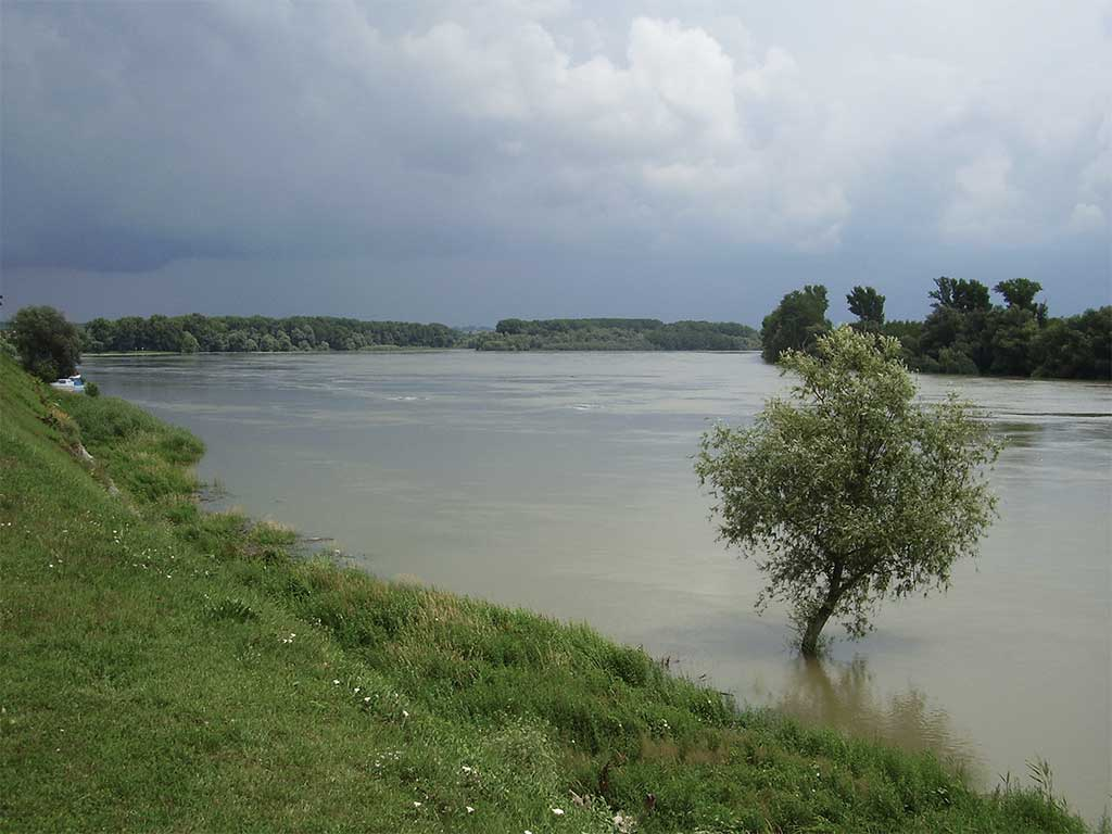 Dalj - The Danube in Dalj (Vukmanić 2011)