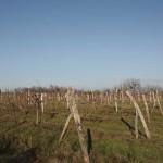 Zmajevac (Várhegy) - Late Roman site Ad Novas (Vukmanić 2009)